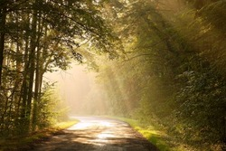 Country road through the misty autumnal woods in the splendor of the morning sun.