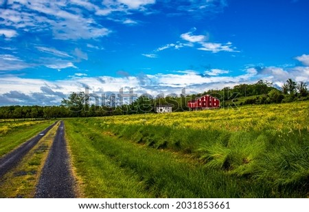 Country road to the farm in summer. Countryside road. Rural road in field. Country road landscape