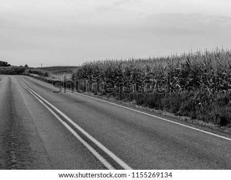 Country road with a cornfield running along it. #1155269134