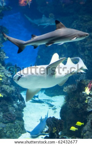 country Spain - Barcelona Aquarium close up stock photo