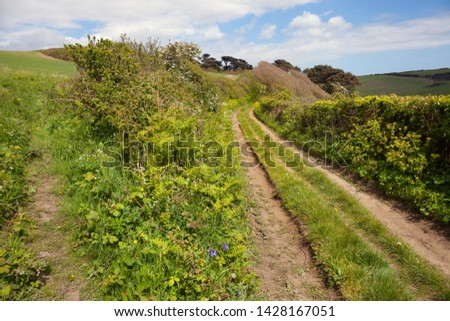 Country track with deep hedgerows, Devon, England.