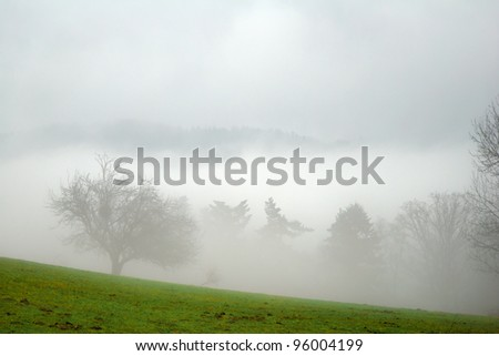 Country Trees in the Fog - stock photo