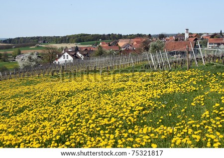 Country view in spring: dandelion field, wine yard, village, forest,