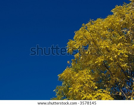 countryside autumn landscape with blue sky and yellow tree
