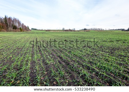countryside fields in autumn with young crops and forests in background, clouds above #533238490
