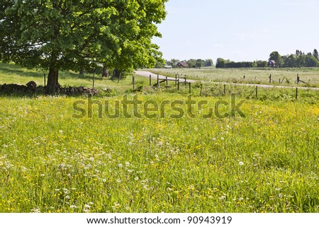 Countryside landscape with flowering meadows