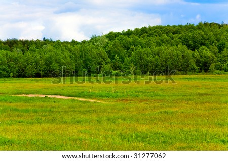 Countryside landscape with meadow and woods