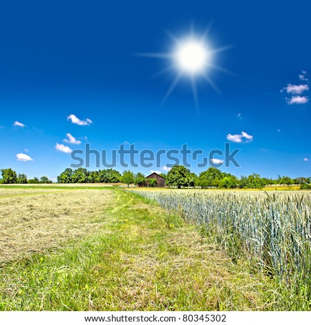 countryside. landscape with wheat field and blue sky
