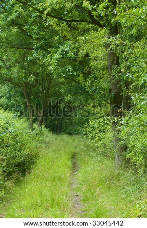 Countryside lane lined with lush green trees