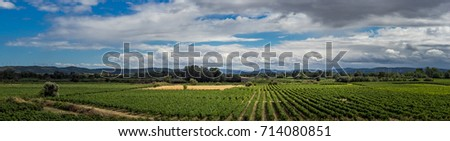 Countryside of France for your agricultural concept with rows of grapevine. Wide shot landscape of farmland in Languedoc-Roussillon region - rural scene with vineyards and fields on horizon.