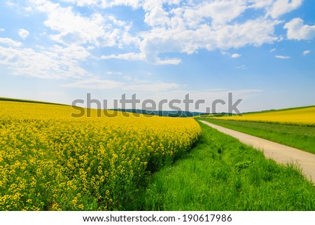 Countryside road along yellow rapeseed flower field and blue sky, Burgenland, southern Austria