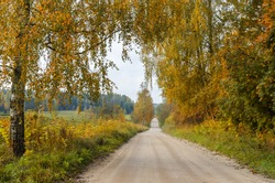Countryside road in autumn