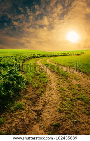 countryside road in summer morning