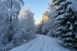 Countryside road passing a snow covered forest in Sweden, with a thick layer of snow on trees and ground and the sun shining from a clear blue sky