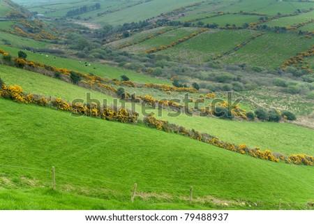Countryside scene at Western Ireland