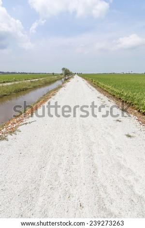 Countryside street through paddy field