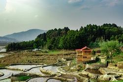 countryside tarnish framing rice field with small resting hut at morning image is taken at ziro arunachal pradesh india.