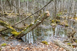 Countryside view of marsh featuring tree stump with mushrooms growth and wetland vegetation