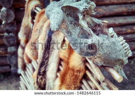 Countryside wattle on which hunters dry tanned skins. Animal skins on the fence and skulls with horns. #1482646115