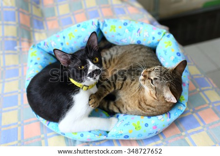 Couple cats sleep and hugging in their soft cozy bed