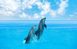 Couple dolphins jumping on the water with bright blue sky