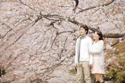 Couple enjoying to see the cherry blossom