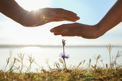 Couple holding hands over blooming flower outdoors, closeup. Nature healing power