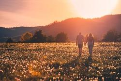Couple in love walking in beautiful dandelions field in soft warm orange and yellow sunrise light