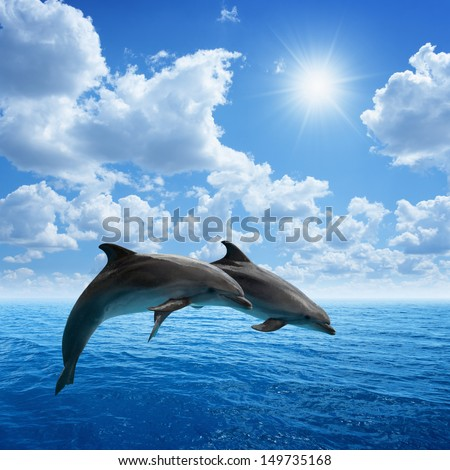 Couple jumping dolphins, blue sea and sky, white clouds, bright sun #149735168
