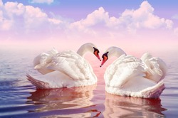 Couple of Beautiful white swans in the foggy rose lake at the sunset with big clouds on the background. Swan. Romantic theme with cygnus in the sea. Morning light. Landscape with swan. White swan