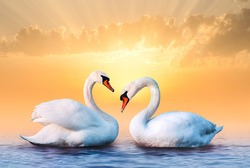 Couple of beautiful white swans in the sea at the romantic bright sunset. Yellow sky and clouds on the background