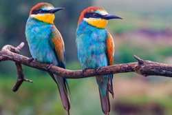 couple of colored birds looks in one direction