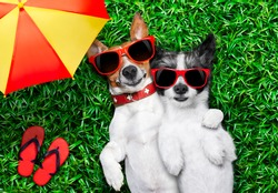 couple of dogs in love very close together lying on grass under the umbrella beside flip flops