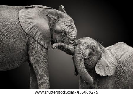 stock photo couple of elephants in black and white colors 455068276 - Каталог — Фотообои «Животные»