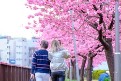 Couple of enjoying are walking to see the beautiful pink cherry blossoms and having happy time during spring season in japan