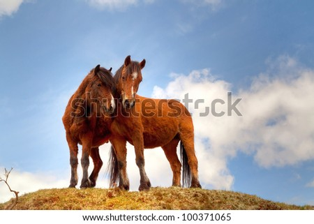 Couple of horses on the hill