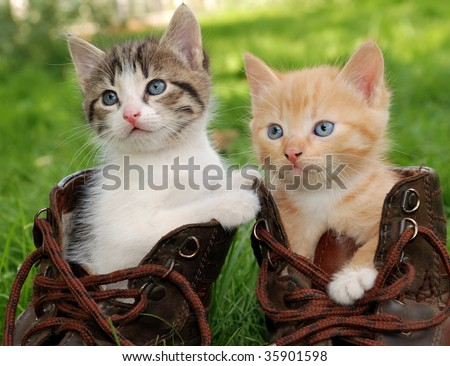 couple of little kittens sitting in boots