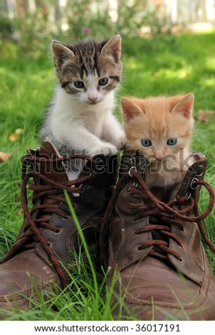 couple of little kittens sitting in boots outdoors on green grass
