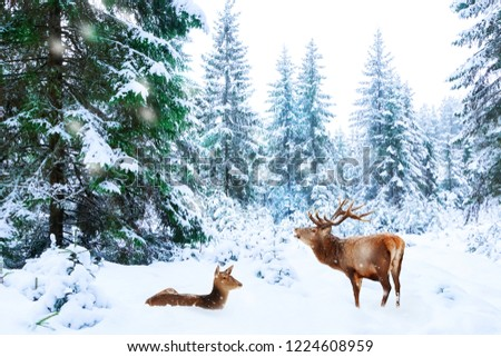 Couple of noble deer in a snowy winter forest. Christmas fantasy image. Winter wonderland.