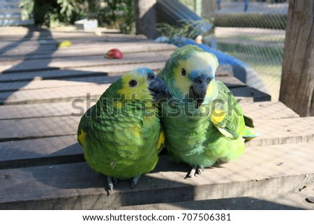 Shutterstock couple of parrots