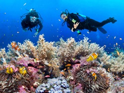 Couple of scuba divers explore coral reef.