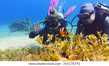 Stock Photo Couple of scuba divers on the sandy bottom watching beautiful klown fish