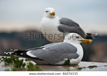 couple of seagulls sitting place