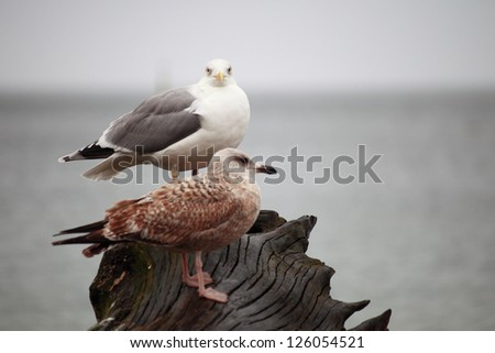 couple of seagulls sitting place outdoor nature
