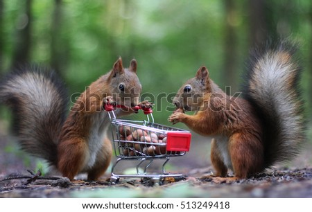 Couple of squirrels eat nuts from the small cart