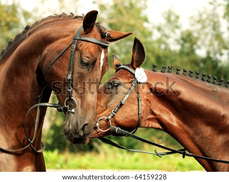couple of stallions