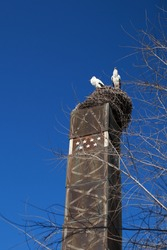 couple of storks resting in the nest