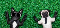 couple of two cool dogs on grass or meadow in the park with peace or victory fingers