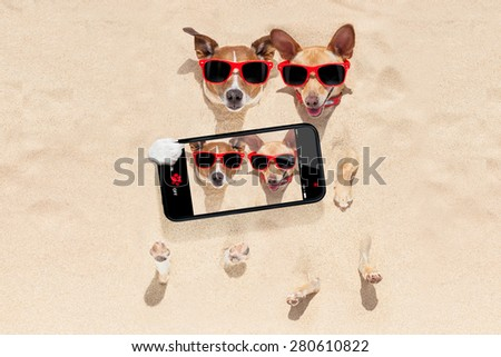 couple of two dogs buried in the sand at the beach on summer vacation holidays , having fun taking a selfie with smartphone