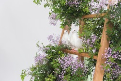 couple of white pigeons sitting on wooden step ladder in pink flowers. beautiful wedding birds in decorative plants on white background.